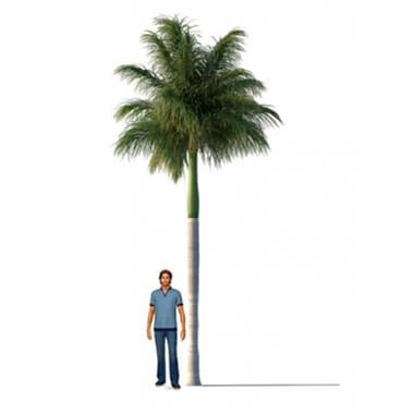 Smart Palm Tree